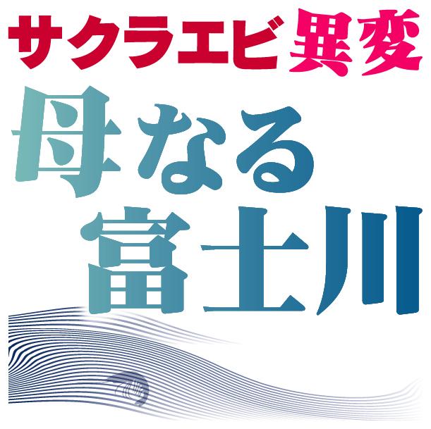静岡新聞「サクラエビ異変」取材班